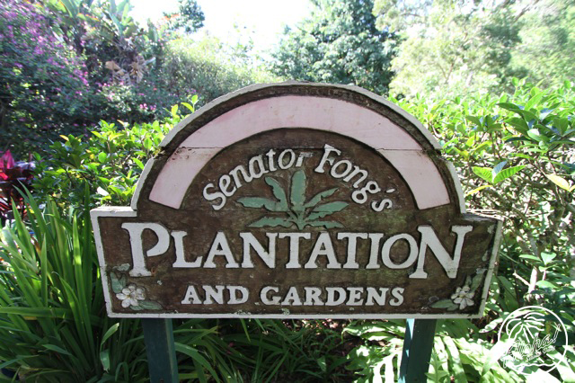 Senator fongs fitted hawaii for Senator fong s plantation and gardens